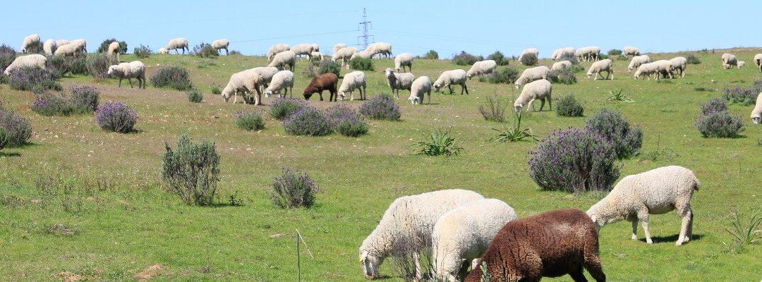 Diputación destina 384.000 euros al área de Investigación Agrícola y Ganadera